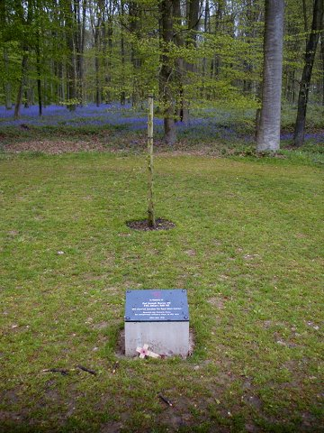 Delville Wood Davies - Hill VC Tree