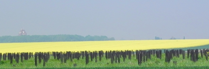 Thiepval seen from the 1st AIF Monument